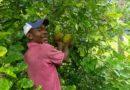 Zimbali Retreats, un jardín del Edén en Jamaica